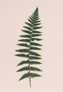 Close Up Of Fern Leaf Stock Photos - 86586113