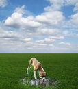 Dog Drinks From A Puddle On The Green Field Royalty Free Stock Image - 8666726