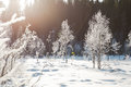 Winter Field Landscape With The Frosty Trees Lit By Soft Sunset Light - Snowy Landscape Scene In Warm Tones Stock Photography - 86721462