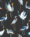 Watercolor Vector African Crane Pattern Royalty Free Stock Photos - 86735518