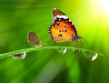 Dew On A Spring Grass And Butterfly Royalty Free Stock Image - 86749556