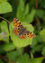 Map Butterfly Stock Photography - 8685212