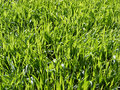 Meadow Royalty Free Stock Image - 8689916