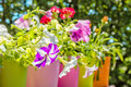 Bright Summer Flowers In Colorful Flowerpots, Backlit Royalty Free Stock Photos - 86993358