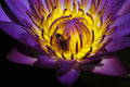 Water Lily Stock Images - 872574