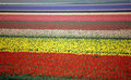 Rainbow Tulip Field Stock Photos - 875253