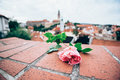 Pink Rose On Red Brick With Blured Cesky Krumlov Castle Royalty Free Stock Photos - 87069468
