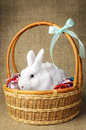 White Clean Beautiful Easter Bunny Next To A Wicker Basket With Eggs In The Background Krashenyymi Natural Burlap Cloth Stock Photography - 87093192