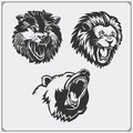 Illustrations Of Wild Animals. Bear, Lion And Wolf. Stock Photography - 87219792