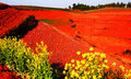 Red Countryside Fields Royalty Free Stock Photography - 8732357