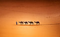 Camels In The Desert Royalty Free Stock Image - 87327056