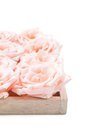 Coral Rose Royalty Free Stock Photo - 87356275