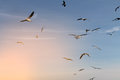 Group Of Seagulls Flying In The Blue Sky Royalty Free Stock Photography - 87382357