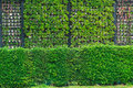Eco And Modern Vertical Garden Nature Fresh Wall. Stock Image - 87430741