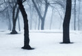 Winter Forest In Fog. Foggy Trees In The Cold Morning Stock Photos - 87458533