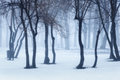 Winter Forest In Fog. Foggy Trees In The Cold Morning Stock Images - 87458644