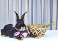 On A Light Background Near The Easter Basket Lies Bunny Royalty Free Stock Image - 87497096