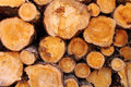 Close Up View On Pile Of Round Logs Royalty Free Stock Images - 87508449