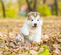 Cute Puppy And Small Kitten Sitting Together In Autumn Park Stock Photo - 87521840