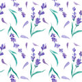 Watercolor  Pattern With Lavender. Hand Painting. Seamless Pattern For Fabric, Paper And Other Printing And Web Projects. Royalty Free Stock Photos - 87542228
