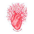 Anatomical Heart With Flowers. Tagline Love Is All We Need. Valentines Day Card. Vector Illustration, Elements For Stock Photography - 87571262