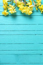 Border From Yellow Narcissus Or Daffodil Flowers On Aquamarine Stock Image - 87573711