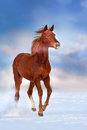 Horse In Snow Stock Images - 87614774