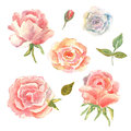 Floral Set. Collection With Flowers, Drawing Watercolor. Pink, R Royalty Free Stock Images - 87621009
