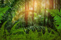 Green Trees And Leaf Greenery Royalty Free Stock Image - 87634476