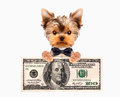 Funny Dogs Holding Bundles Of Money Stock Photos - 87717393