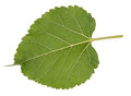 Leaf Green Leaf Macro Decoration. Royalty Free Stock Image - 87738136