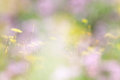 Abstract Photo Of Meadow With Wildflowers Stock Photo - 87739660