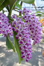 The Rare Species Asian Orchid Royalty Free Stock Images - 87763699