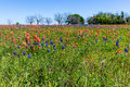 A Variety Of Colorful Wildflowers In Texas Stock Photography - 87815262