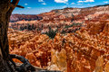 Colorful Hoodoo Rock Formations In Bryce Canyon National Park, U Royalty Free Stock Photo - 87816995