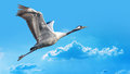 Blue-grey Bird Flying Against Blue Sky Royalty Free Stock Images - 87827769