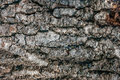 Dark Tree Bark Texture With Strong Veins Stock Photography - 87854452