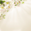 Spring Flowers On  Background Stock Images - 87860164