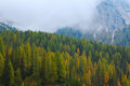Misty Pine Forest On The Hillside At Dolomites Royalty Free Stock Photography - 87878677