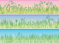 Grass And Flowers Stock Photo - 8799310