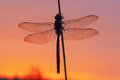 Emperor Dragonfly With Red Morning Sky Royalty Free Stock Photography - 87905797