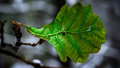 Leaf Stock Photography - 87965682