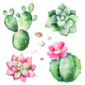 Watercolor Collection With Succulents Plants,pebble Stones,cactus. Royalty Free Stock Photography - 87981067