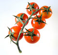 Tomato Cluster Serie 3 Royalty Free Stock Photography - 881447
