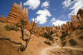 Bryce Canyon Trail Stock Image - 884341