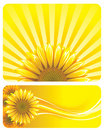 SUNFLOWER Royalty Free Stock Photography - 8809947