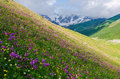 Summer Landscape With Blossoming Mountain Valley In Georgia Royalty Free Stock Images - 88053319