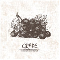 Digital Vector Detailed Grape Hand Drawn Royalty Free Stock Images - 88107919
