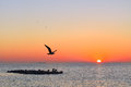 Seagull In The Morning Royalty Free Stock Images - 88181219