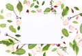 Sheet Of Paper For Text In A Frame Of Flowers, Petals And Green Royalty Free Stock Photography - 88218977